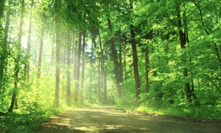 heller, durchleuchteter Wald